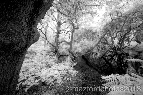 Infrared B&W conversion photo
