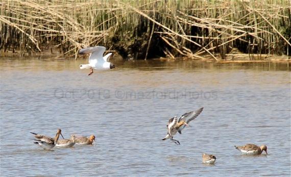 Watermarked Birds 1-5-1