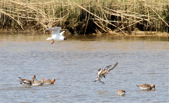 Watermarked Birds 1-5-1