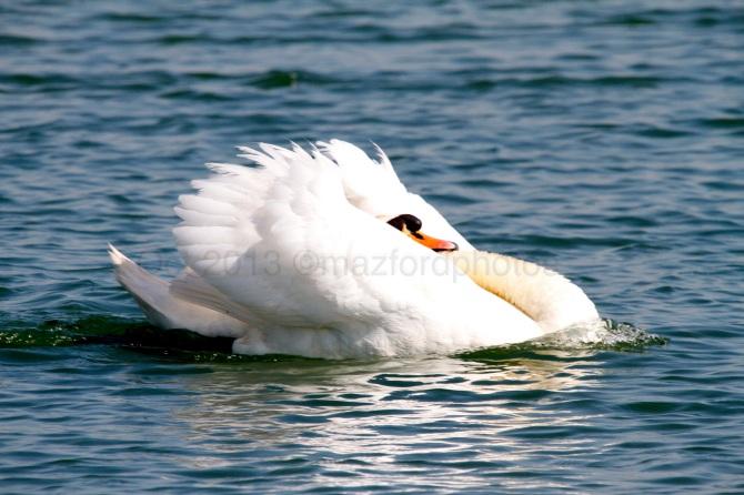 Watermarked Birds 1-5-4