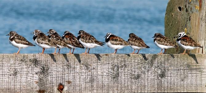Watermarked Birds 1-5