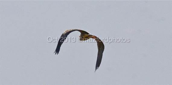 Watermarked Birds 6-9-2