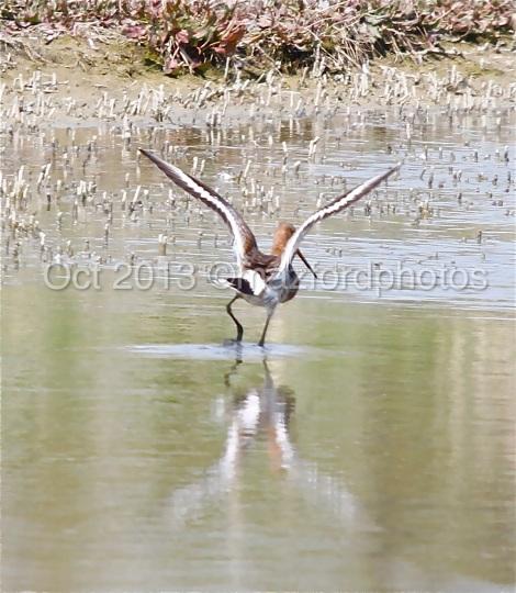 Watermarked Birds 6-9-3