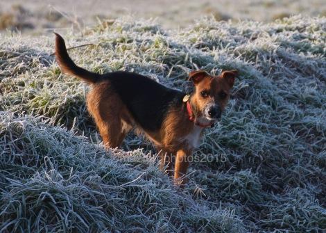 Ziggy stood in long frosty grass
